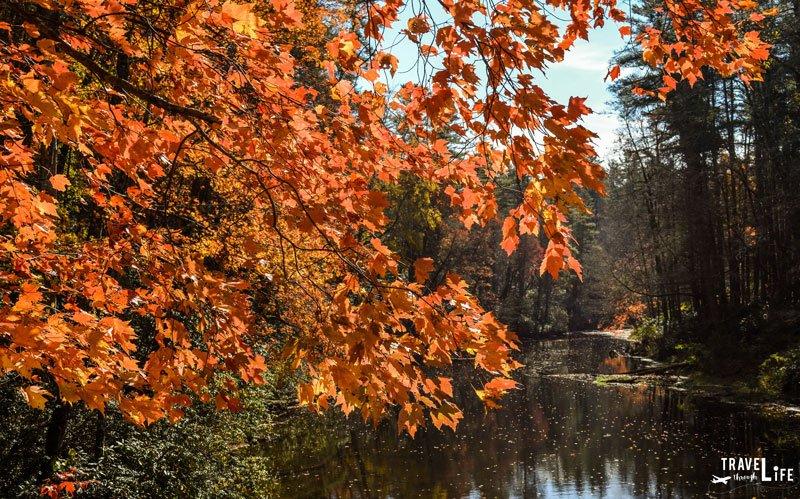Linville Fall Foliage North Carolina USA