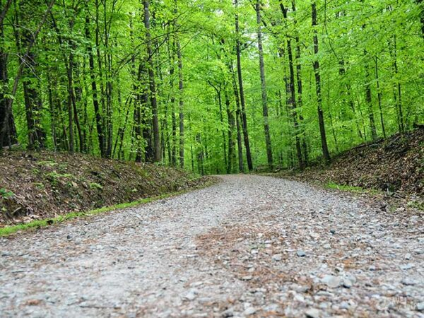 Outdoor Things to Do in Durham NC Duke Forest Image