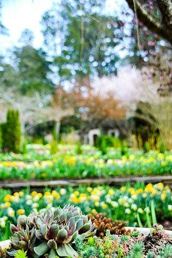 Sarah P Duke Gardens Durham NC Image