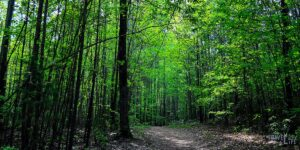The Best Outdoor Things to do in Durham NC