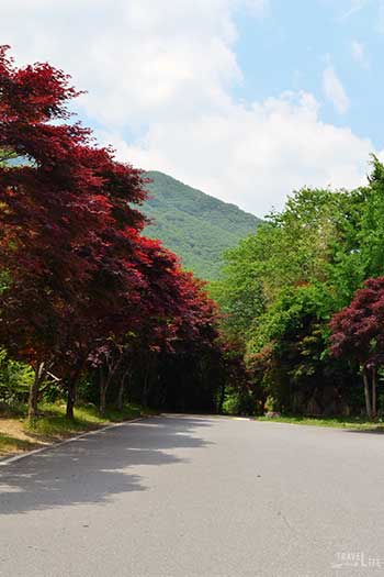 South Korea Road Trip Travel Guide Jirisan National Park Image