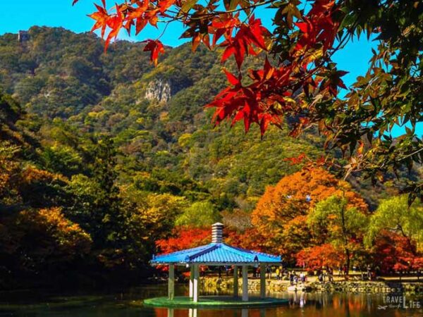 South Korea Road Trip Travel Guide Naejangsan National Park Image