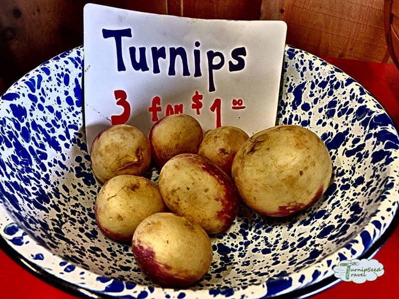 Turnip Photo by Vanessa Chiasson from Turnipseed Travel
