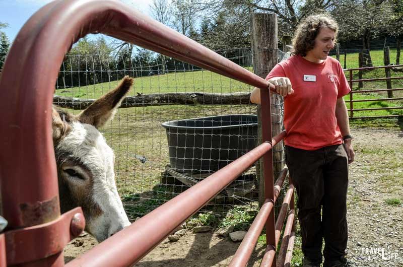Apple Hill Farm Tour
