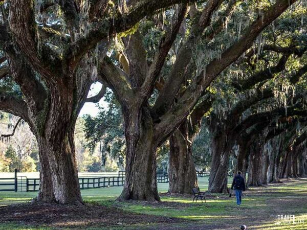 Charleston South Carolina Plantation District Image