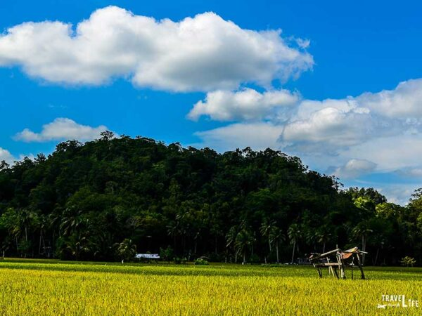 Travel to Philippines Rice Field