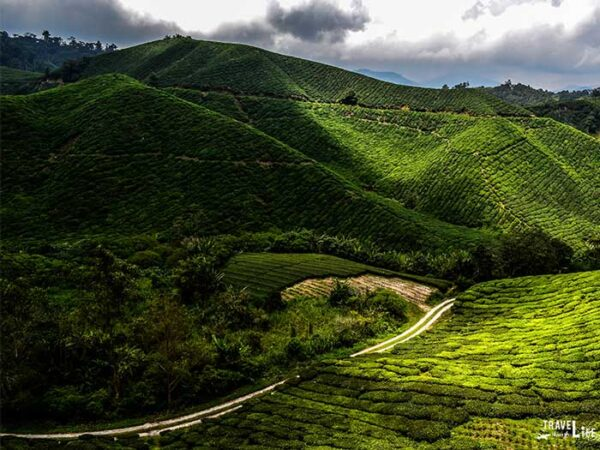 Places to Visit in Southeast Asia Cameron Highlands Malaysia Image