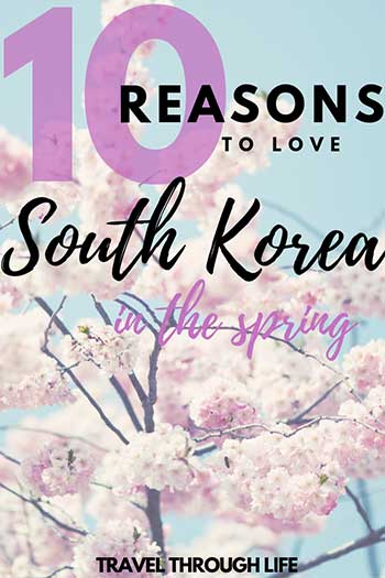 Spring Things to Do in South Korea Pin Image