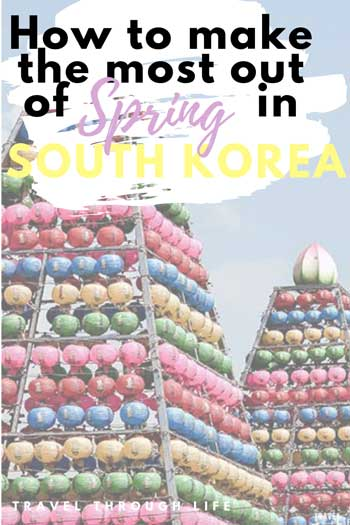 Spring Things to Do in South Korea Pinnable Image