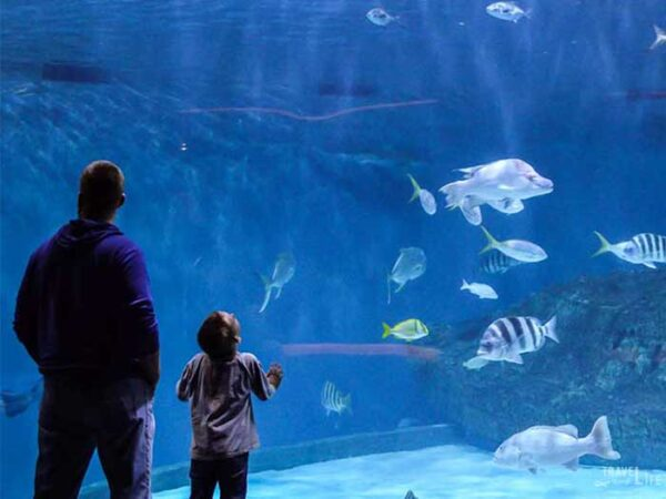 Outer Banks Travel Guide NC Aquarium on Roanoke Island Image