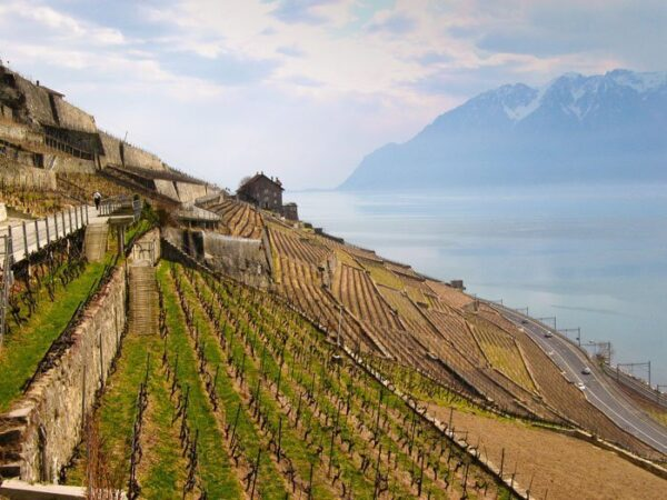 Things to Do in Lake Geneva Switzerland Vineyards Image by Anna Timbrook