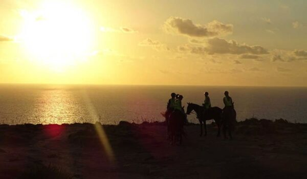 What to Do in Malta Golden Bay Sunset Horse Ride Image by Ricky Marshall