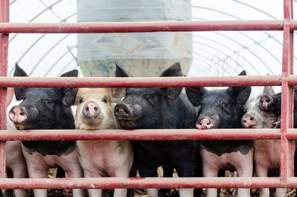 Polyface Farm Virginia Image